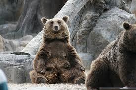 sitting bear 03